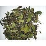 White Tea Bai Mudan