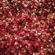 Spice Organic